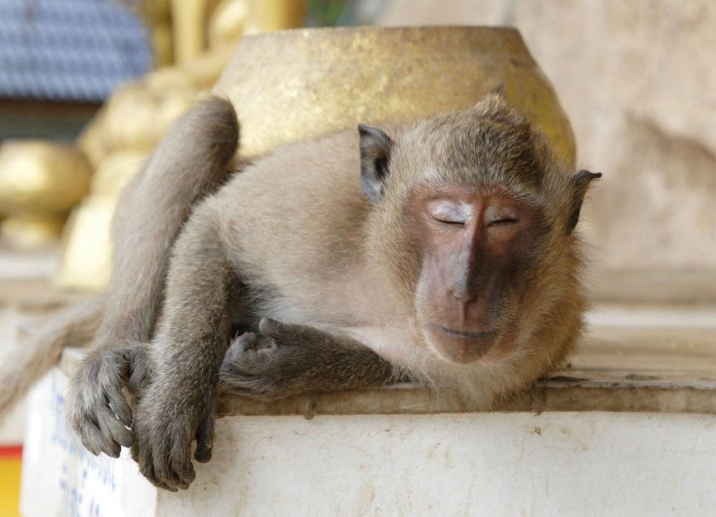 Картинки надписями, открытки я пришла обезьяна