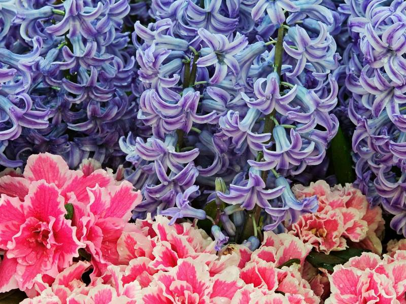 Природа и цветы Post-51-1210188016